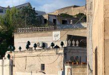 Grottaglie, il paese della Puglia dove nasce il pumo