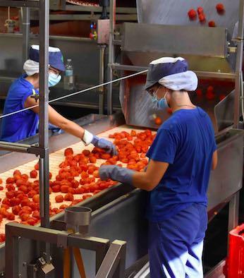 Pomodoro, operaie al lavoro per la campagna 2020