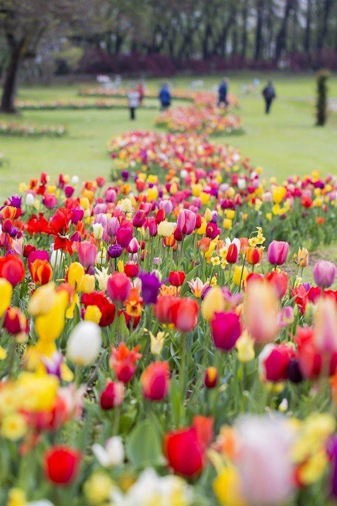 Parco Sigurtà, i tulipani sono più di un milione e coloratissimi
