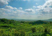 Conegliano e Valdobbiadene, le colline del prosecco protette dall'Unesco