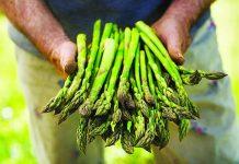 Brio, gli asparagi verde bio italiani