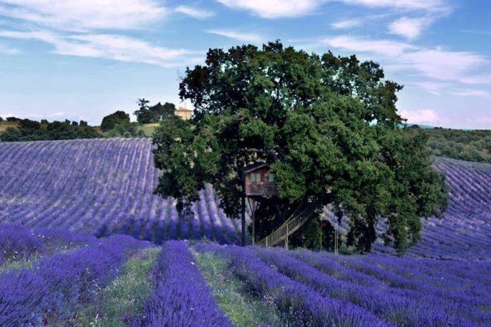 Posti belli e insoliti: la casa sull'albero vicino Viterbo